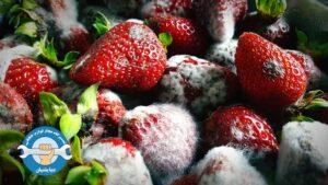 علت کپک زدن مواد غذایی در یخچال